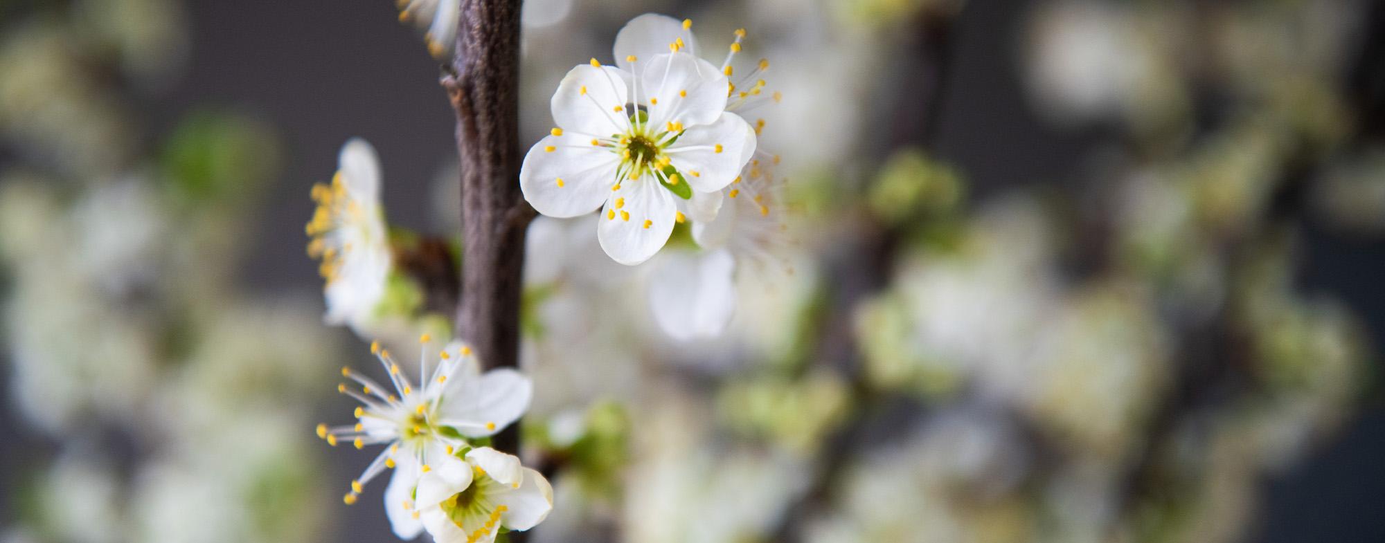 voorjaars aktie korting op fotoshoot. Lente aktie